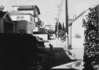 Stray Dog #5, ( Los Angeles), 1990/92 19″x19″ B&W Photograph