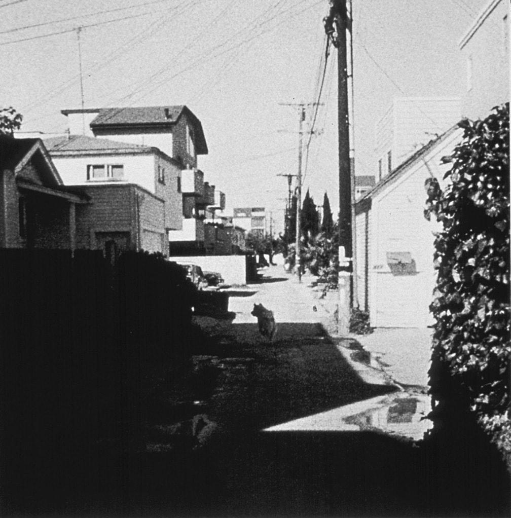 John Divola, Four Landscapes Portfolio, Stray Dog