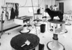 Hills Professional Dog Grooming School Classroom, Inglewood, California, 1984