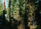 house_in_forest