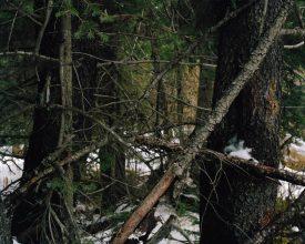 Ron Jude, Lick Creek Line, Group 4