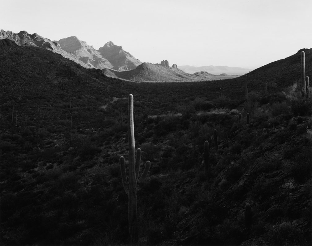 Mark Ruwedel, Pictures of Hell, Tall Cactus in middle of wide sloping canyon