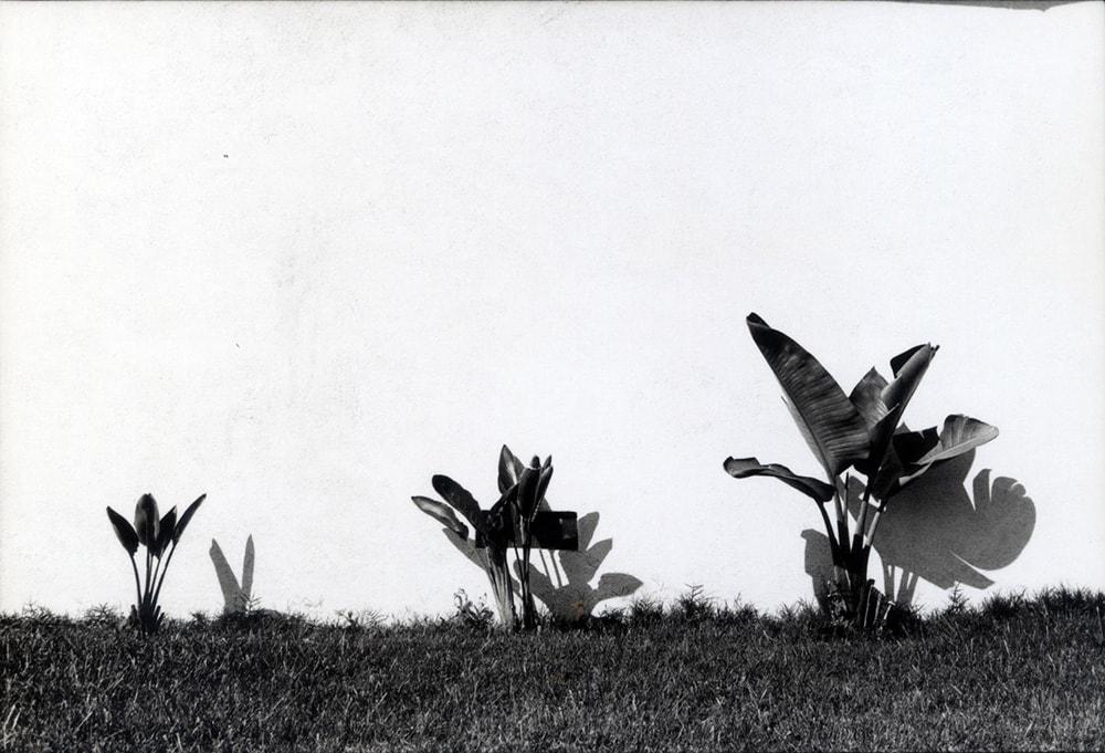 John Divola, Untitled