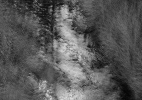_Eagle River_Multi (60 x 48)