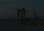 Dark Palms