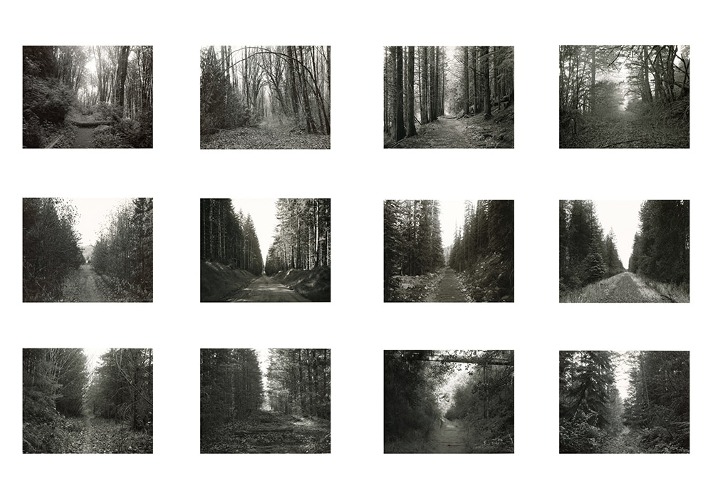 Forest grid