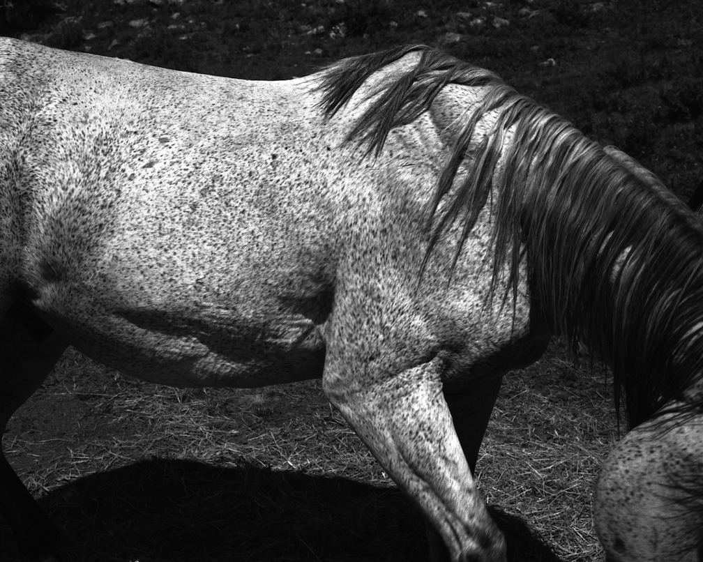 Whitney Hubbs, Untitled (Horse), 2012