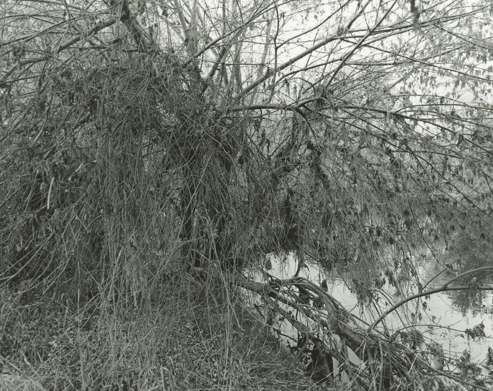 LA River_Sepulveda Basin #80 2018