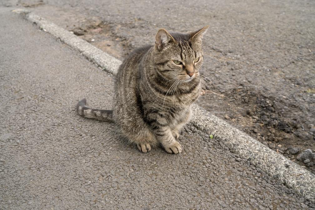 04. Tripod Cat, 2019 (22 x 33in)