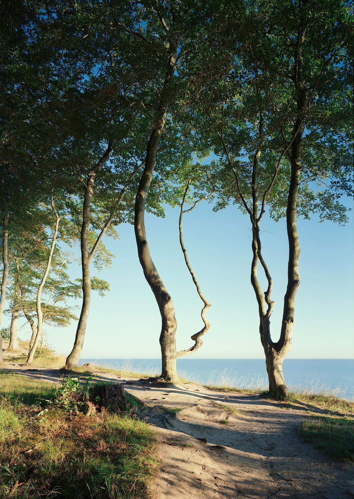 Ostsee Bäume_8Bit