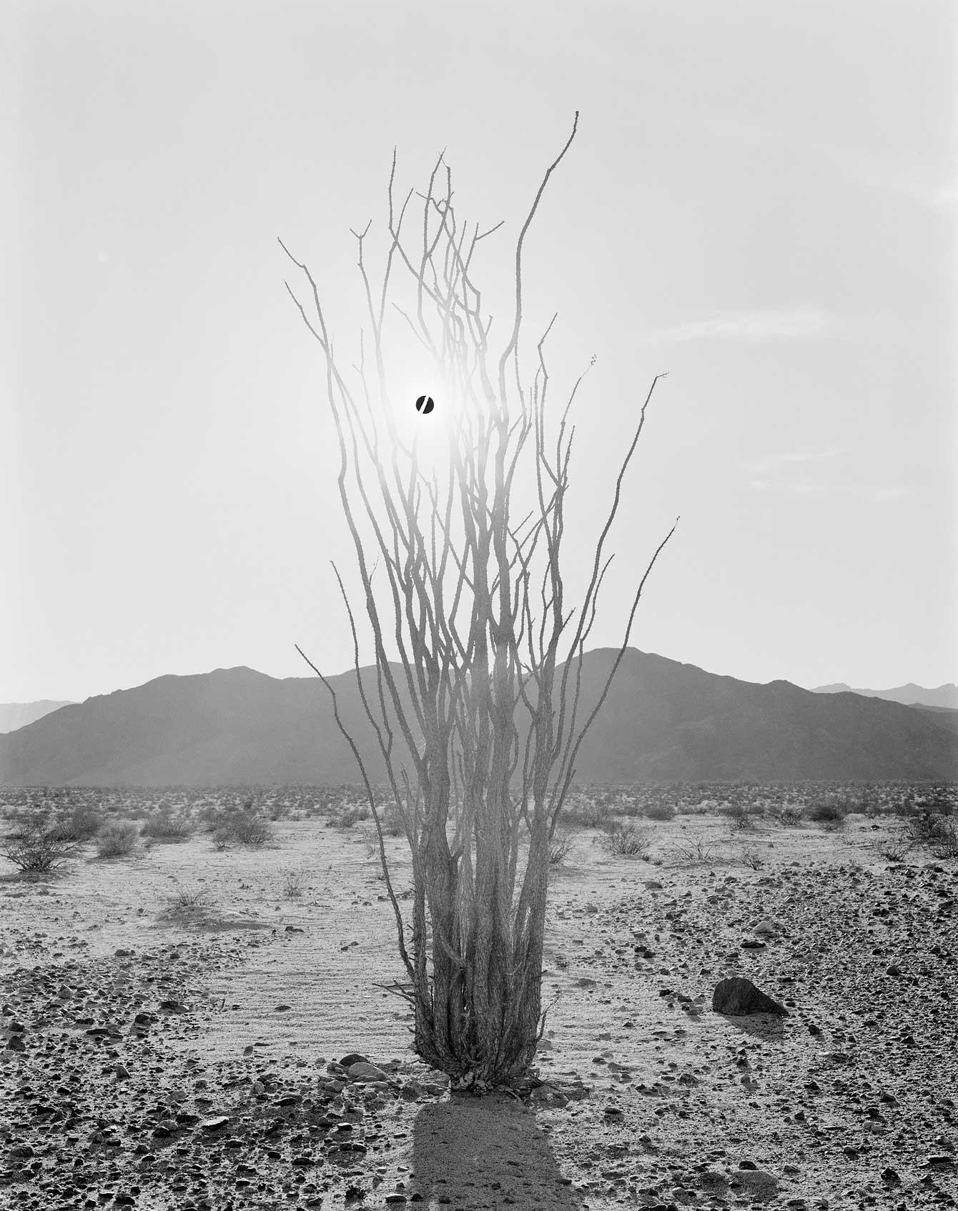 _Black-Sun-and-Ocotillo,-2018(50-x-40′)